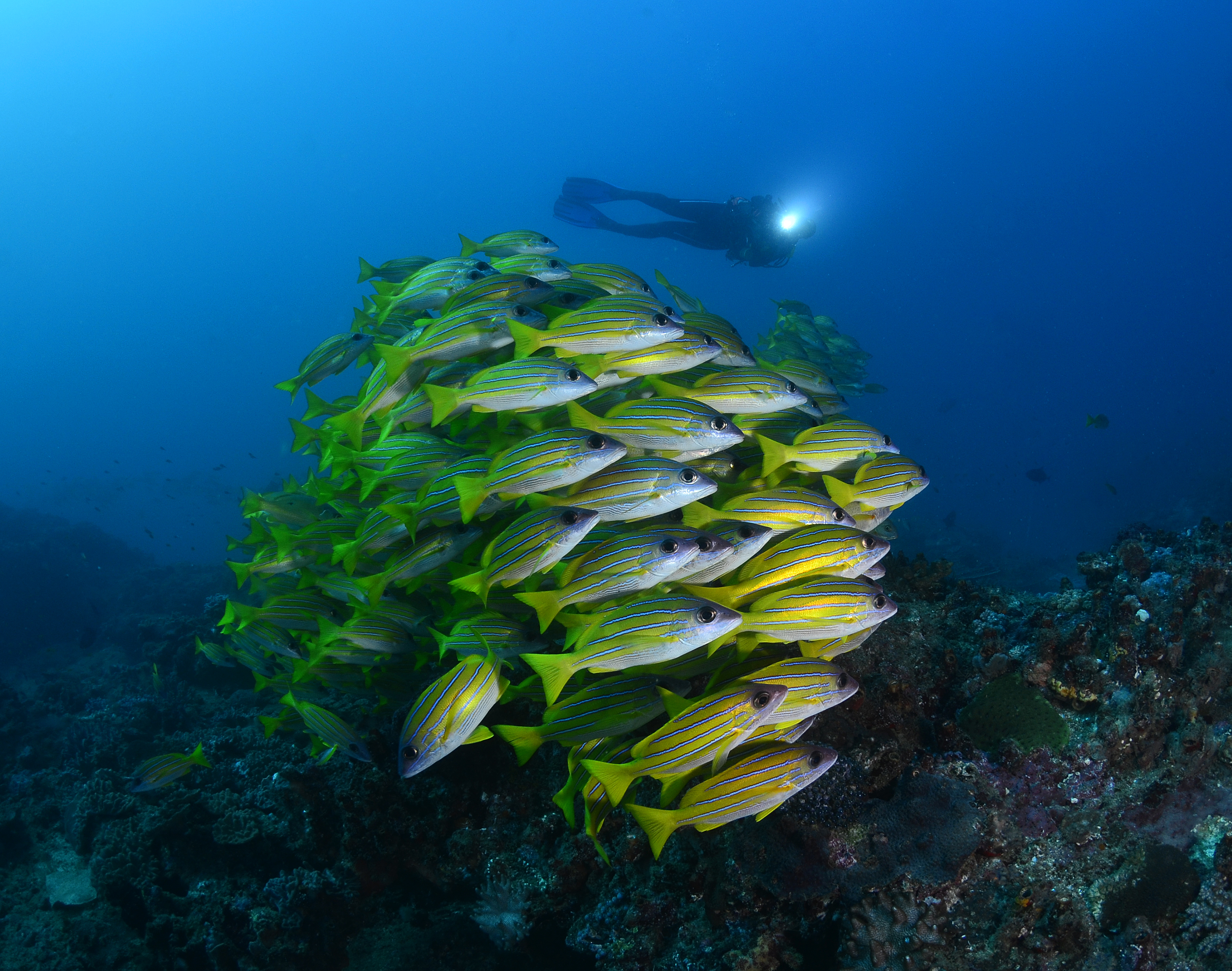 Experience the very best diving that Sodwana Bay has on offer