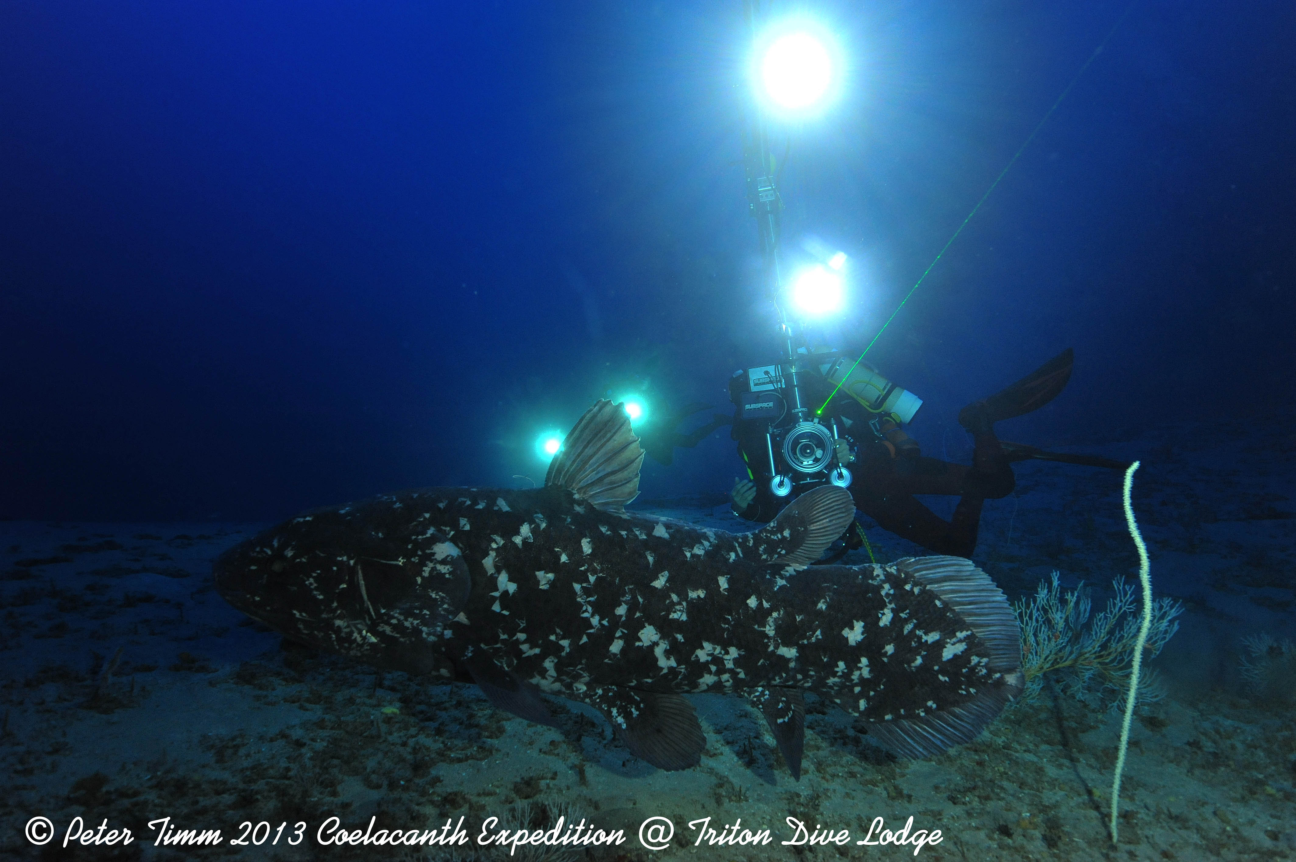 Triton Dive Lodge has been at the forefront of Coelacanth research in Sodwana Bay
