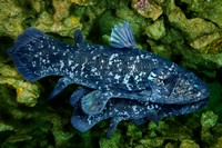 One_Coelacanth_can_Hide_Another
