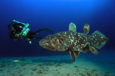 Peter and the Coelacanth